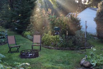 Zone 8 backyard landscape with shrubs for shade
