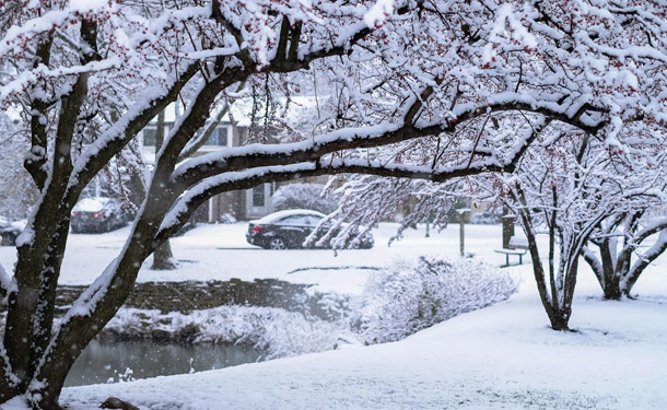 Snow and ice accumulation on deciduous tree branches