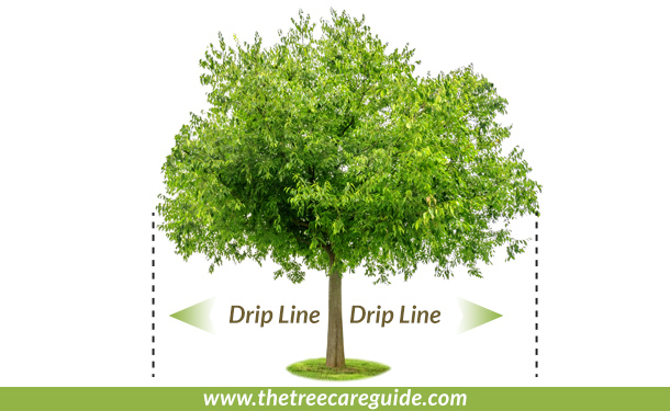 From outer tree leaves down to the soil is the drip line and mulch area is from the trunk to drip line