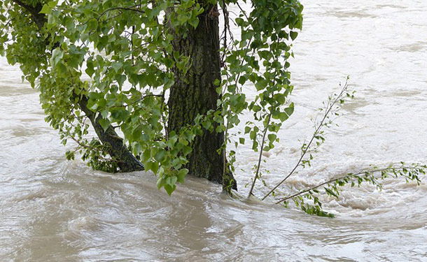 tree in flooded soil