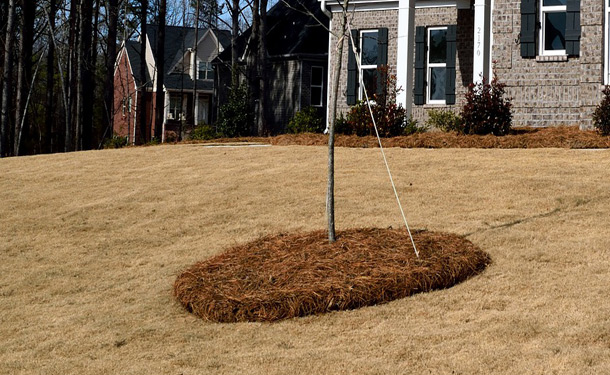 Volcano Mulching Doing This Can Kill Your Tree The Tree Care Guide