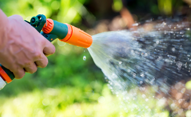 Deciduous and evergreen tree and shrub watering in fall