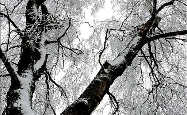 How trees prepare for and enter dormancy after pruning to survive the freeze of winter months