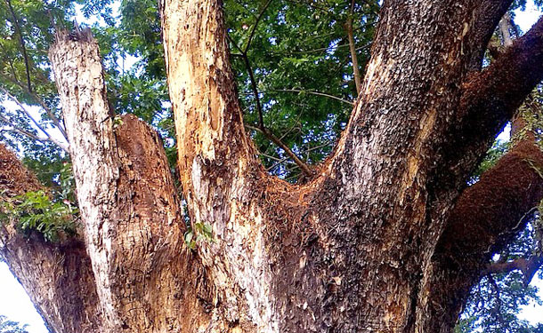 signs of a dead damaged tree that needs removal service