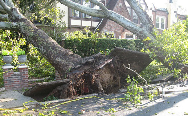 toppled tree broken in rain storm