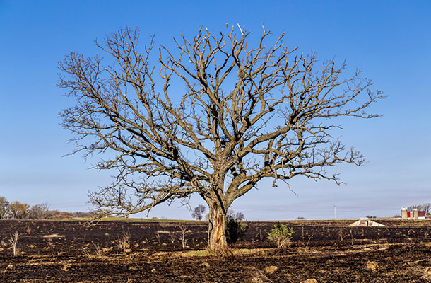 tree drought rain shortage water effect